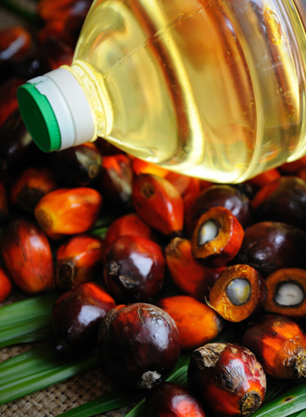 Artboard 3wa Ethiopia's Biggest Edible Oil Factory